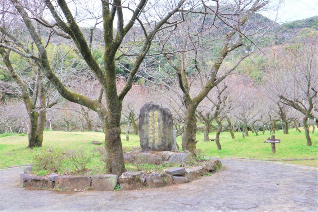 谷尾崎梅林公園で花見しようと思ったらほぼ散ってたのでこっちも飲み散らかしてきた