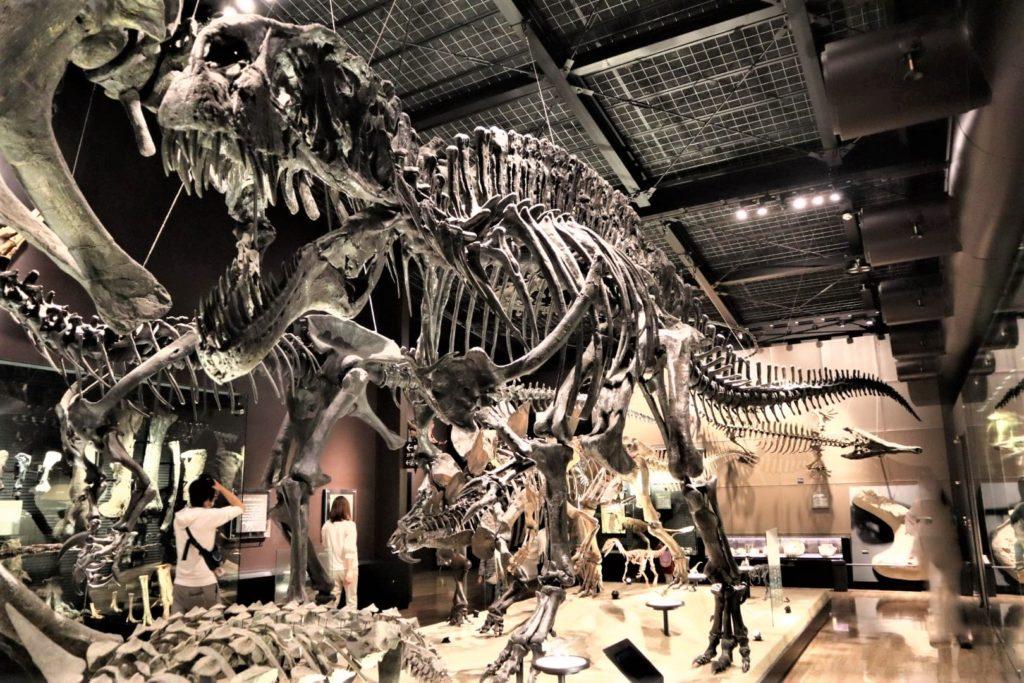 御船恐竜博物館がナイトミュージアムみたいでカメラで撮るのが楽しい(近くの公園も良い)
